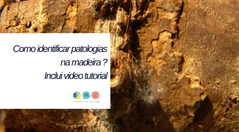 patologias na madeira