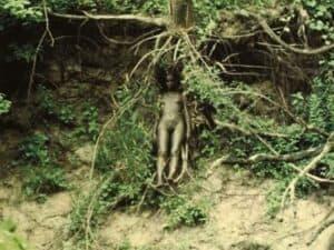 A árvore da vida, 1979